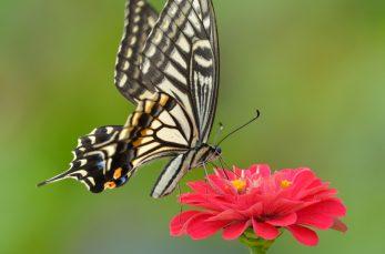 おしべとめしべ・がく・花びらはそれぞれ何個ある? 花のつくりと4要素の役割まとめ